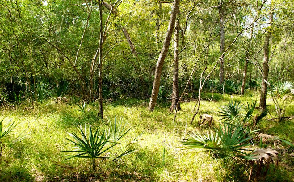 Brazoria_forest