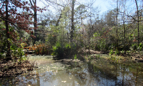 Edith L. Moore Nature Sanctuary, Houston