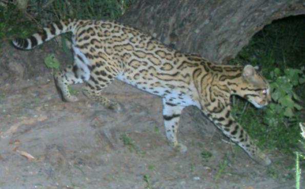 Rio Grande Valley wildlife