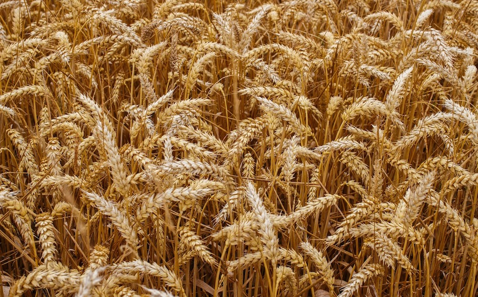 Wheat and chaff