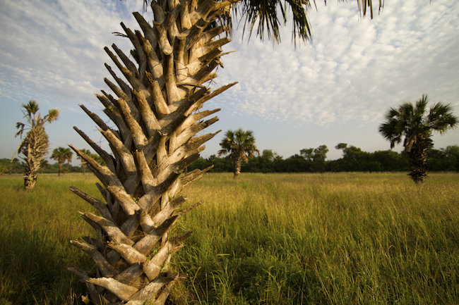 Protected wildlife habitat at the Southmost Preserve near Brownsville